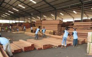 Apitong - Keruing Sorting at KAYU Mill