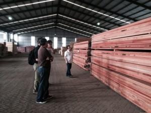 KAYU Grading Team & Steve Wilson. Inspecting wood in Indonesia